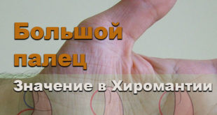 Большой палец в хиромантии